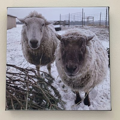 Photo canvas of Frances and Bert