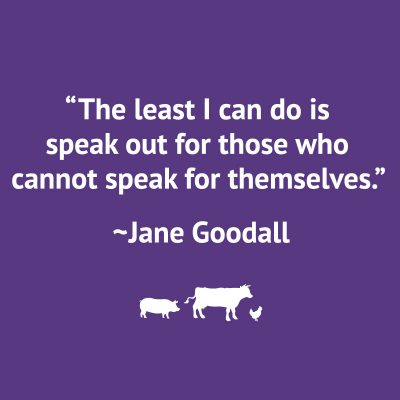 """The least I can do is speak out for those who cannot speak for themselves."" Jane Goodall quote."