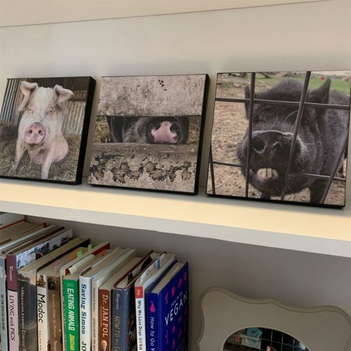 3 pig canvases