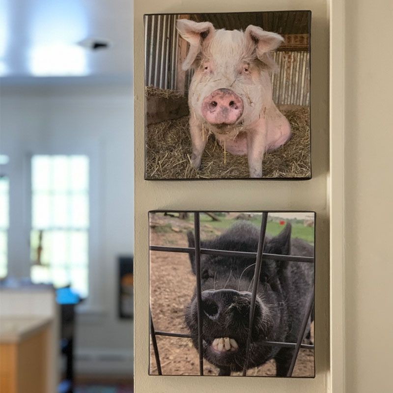 Winnie and Lucy photo canvases
