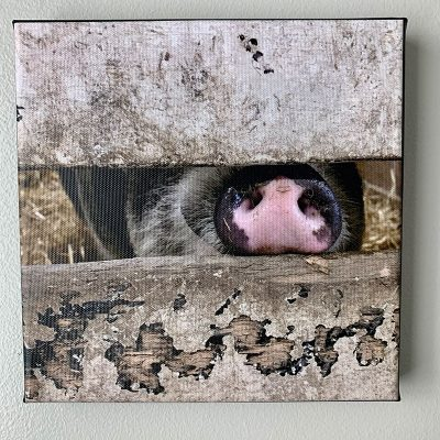Arnold snout canvas