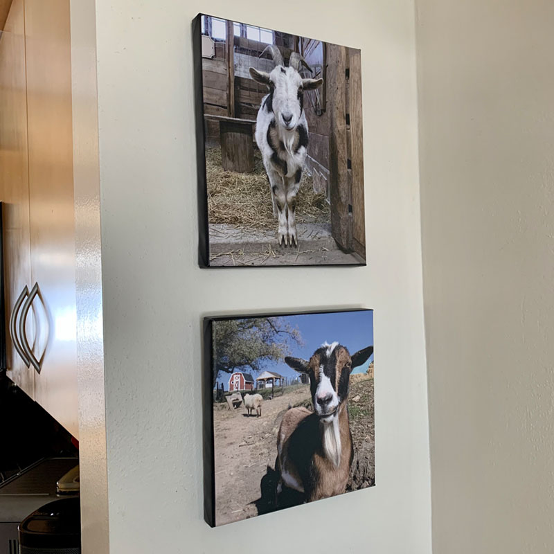 Michael and Rowdy photo canvases